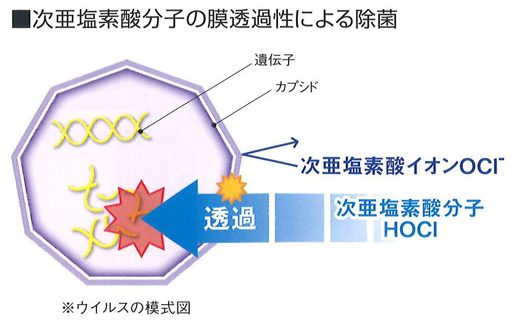 次亜塩素酸分子の膜透過性による除菌